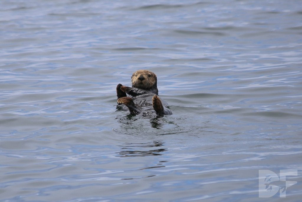 Otterly Delightful