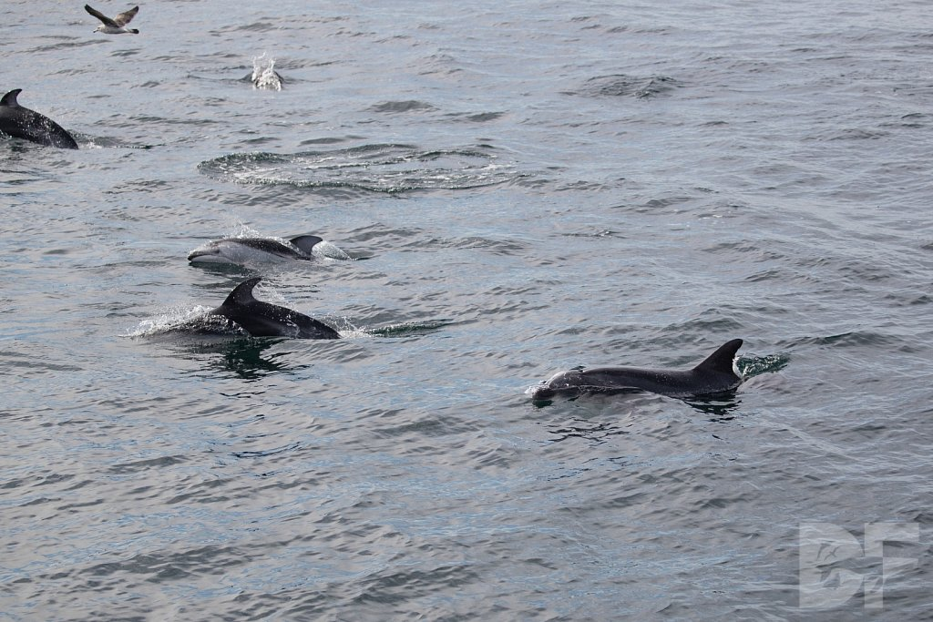 Different Dolphins II