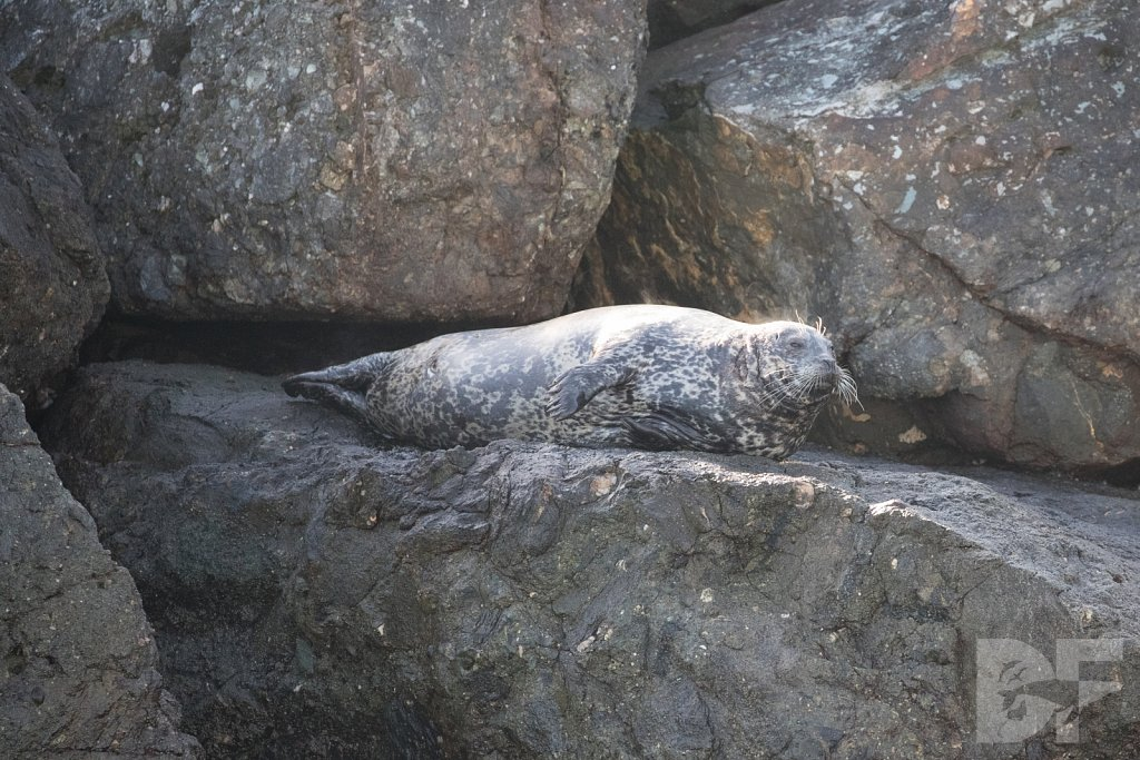 The Most Interesting Seal In the World