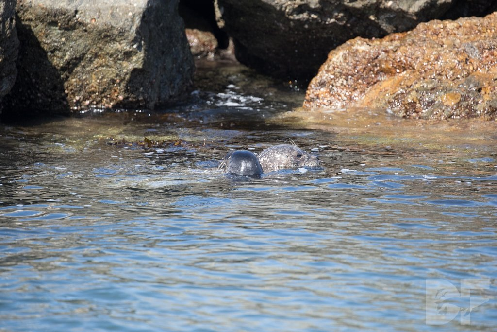 Harbor Seal Haven XIV