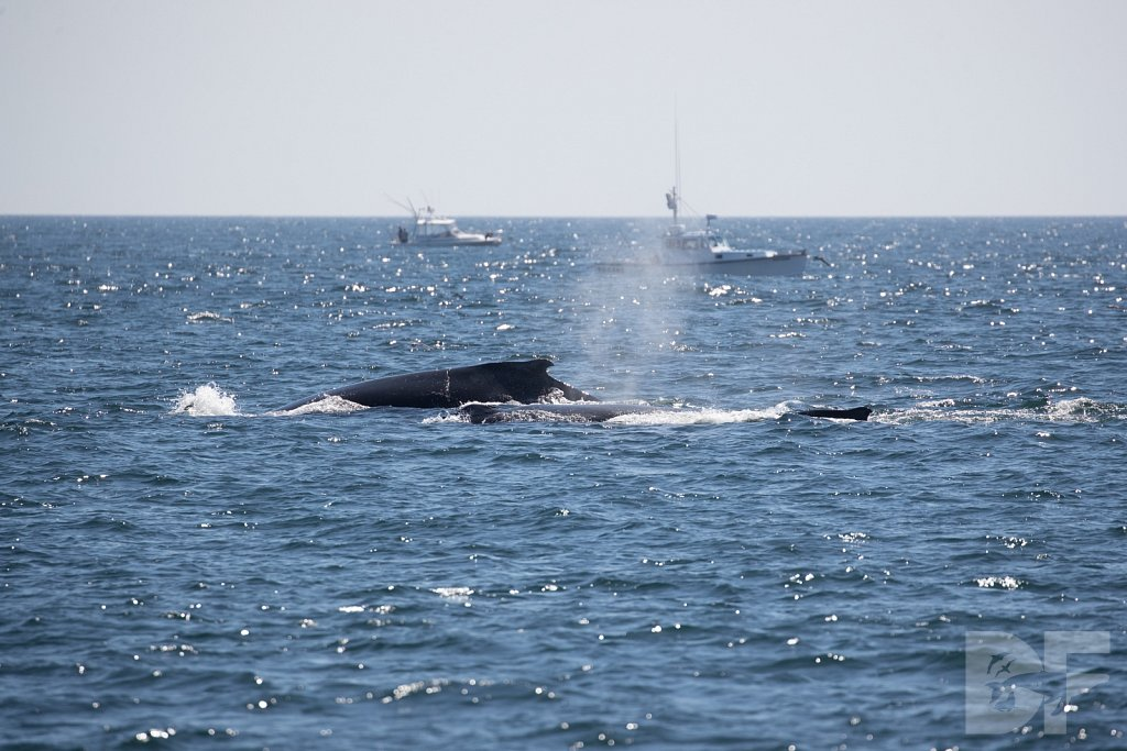 Cape Cod Commotion VII