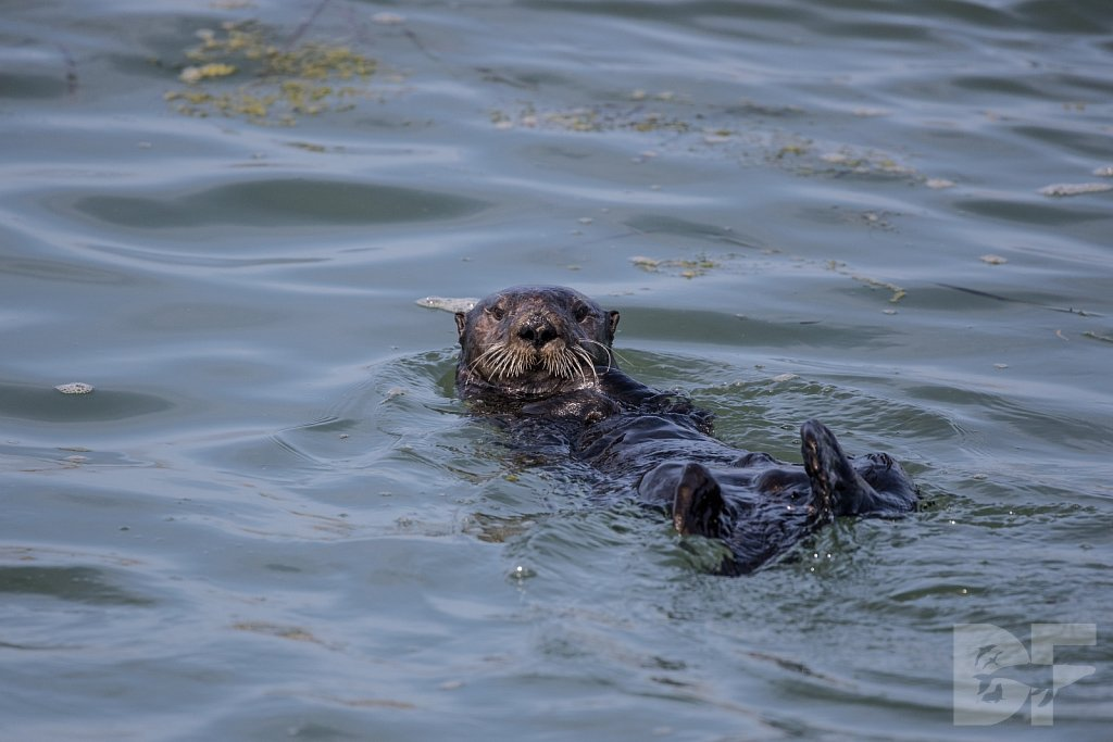 Monterey Day Trip:  Otters VI