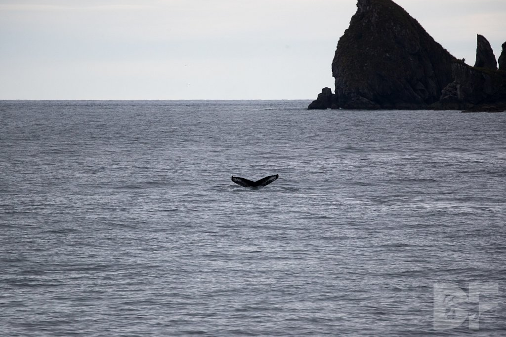 Whale of the North I