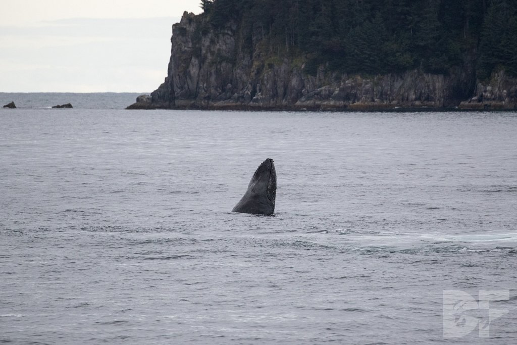 Whale of the North II