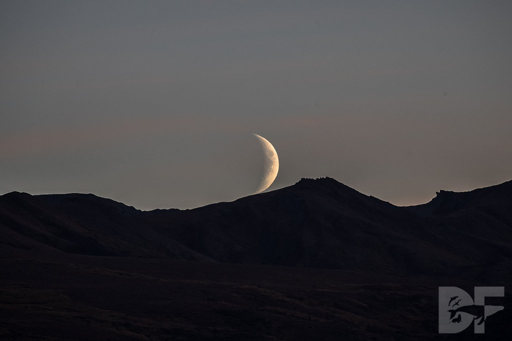 Moon Over Denali