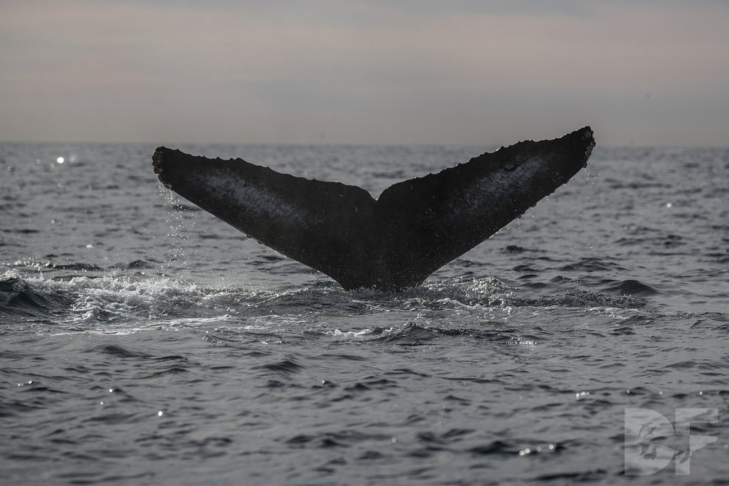 2nd Annual Birthday Humpback Trip XXI