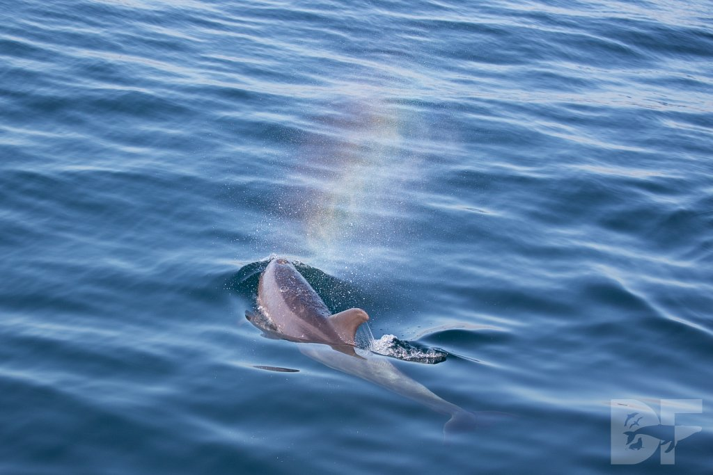 Dolphins Are Forever XXI