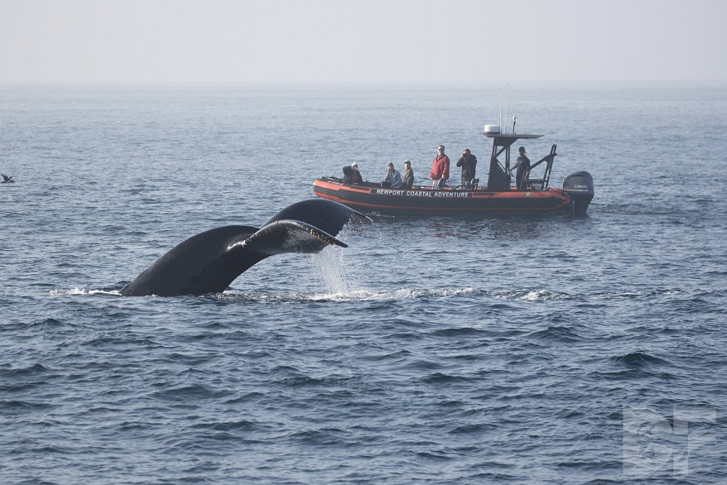 The Holiday Humpbacks VII