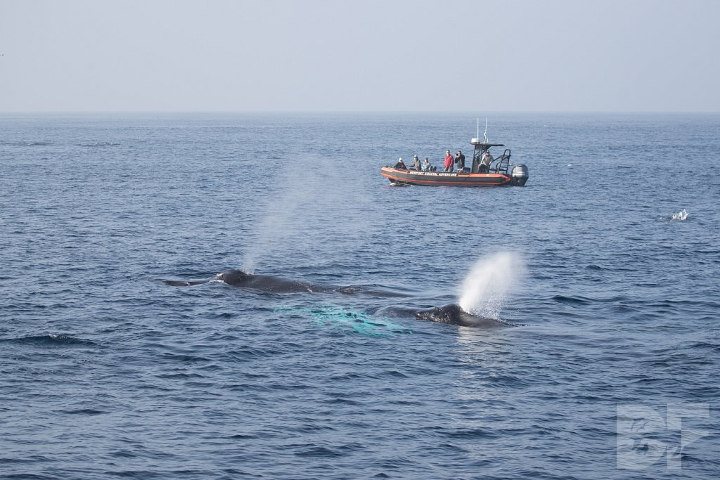 The Holiday Humpbacks IX