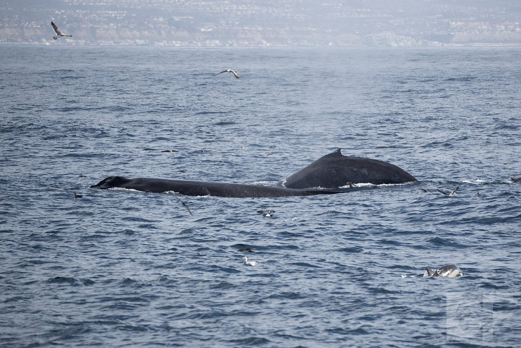 The Holiday Humpbacks XLVI