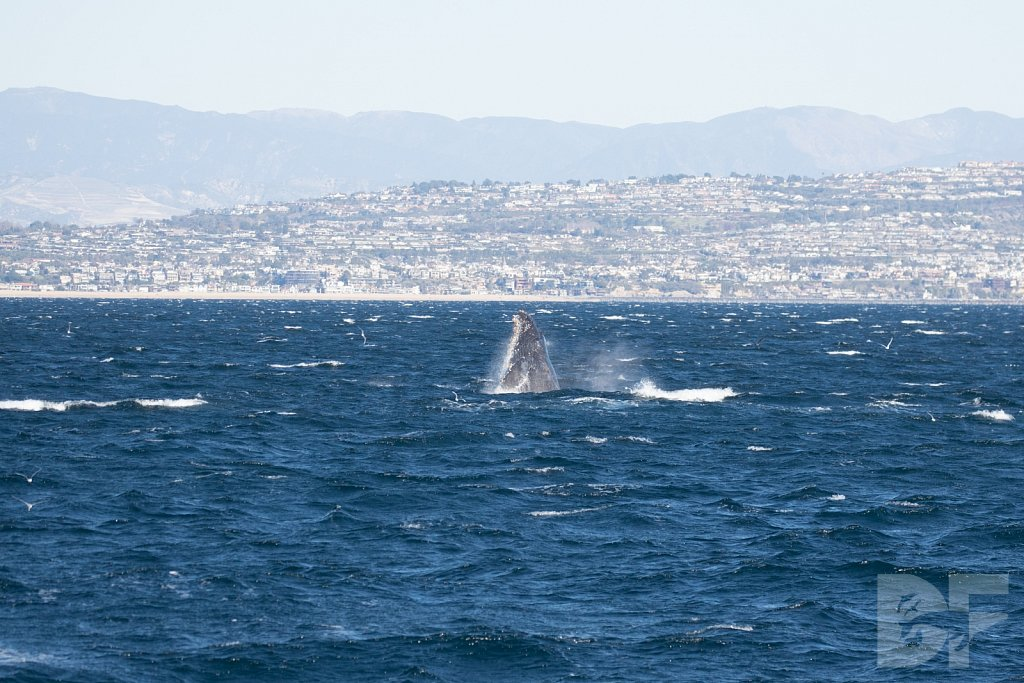 The Holiday Humpbacks LV