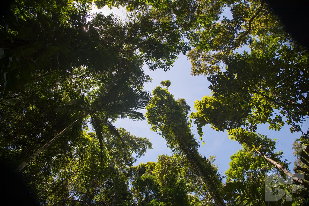 The Daintree Rainforest V