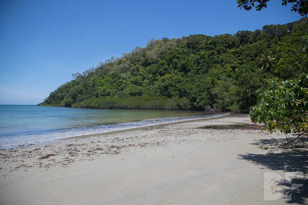 The Daintree Rainforest XII