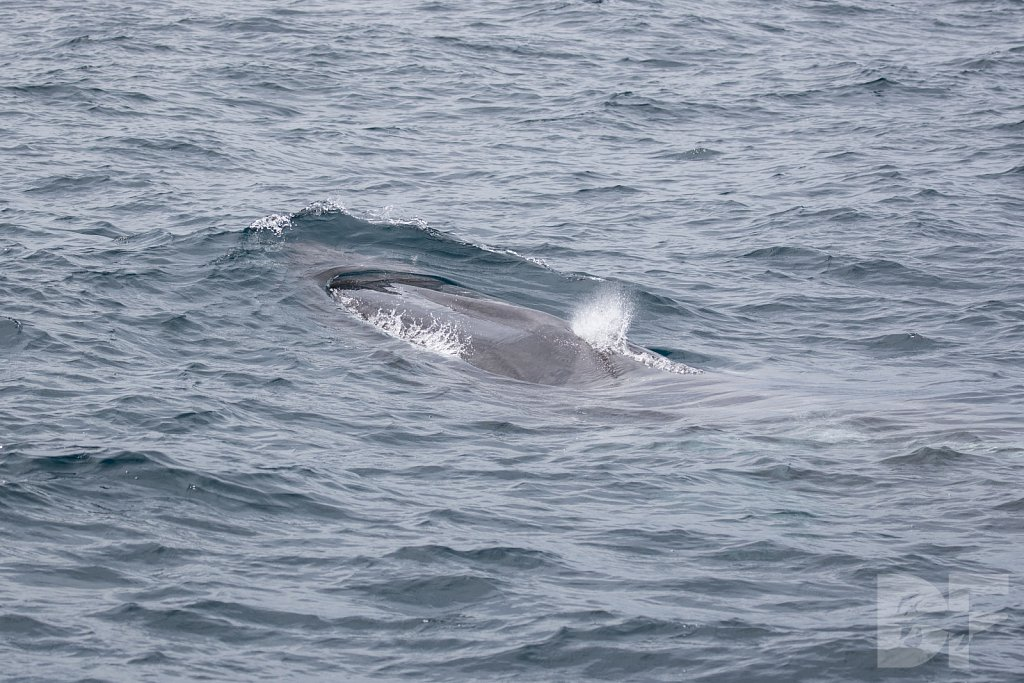 Enter the Fin Whales X