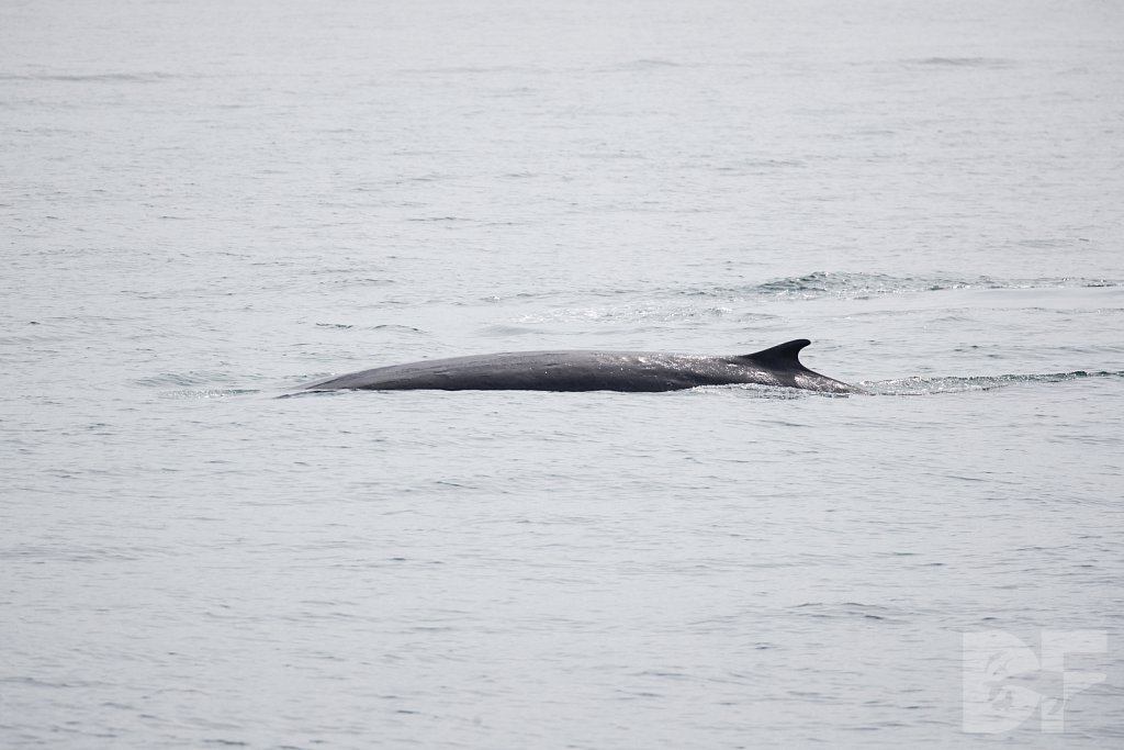 Enter the Fin Whales XVIII