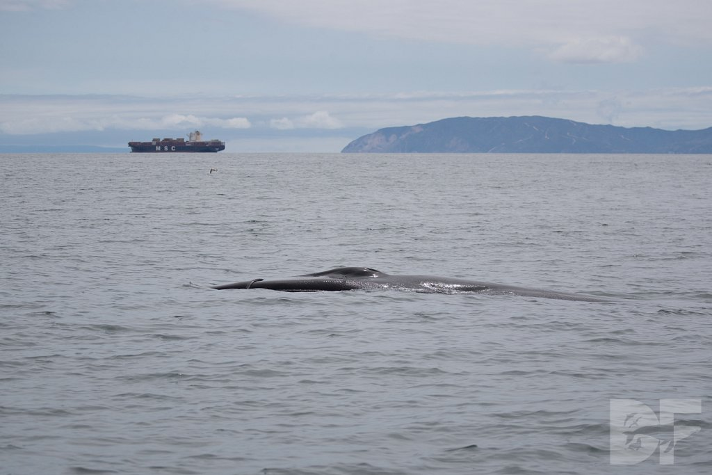 Enter the Fin Whales XXIX