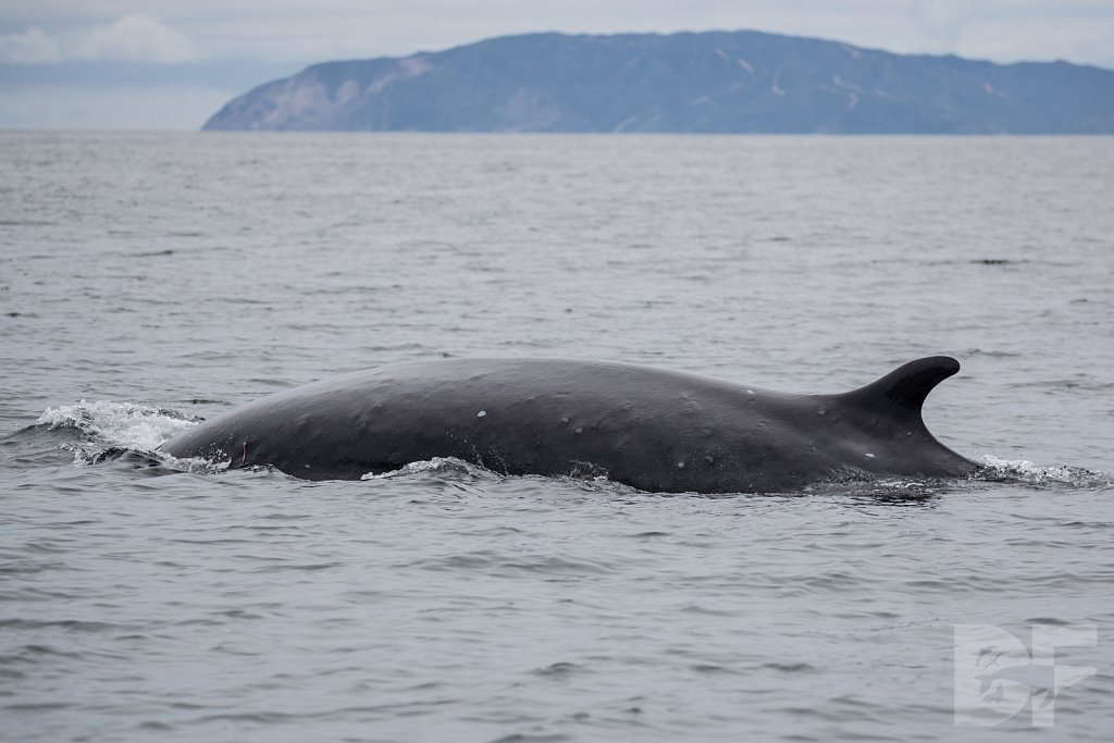 Enter the Fin Whales XXXIII