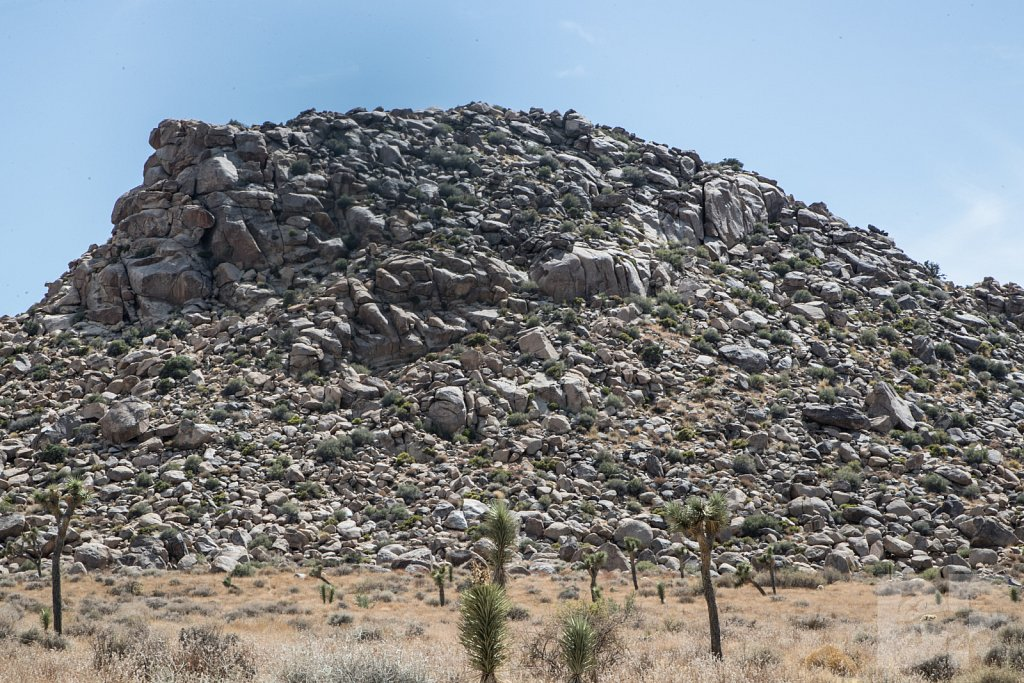 A Day in Joshua Tree VII