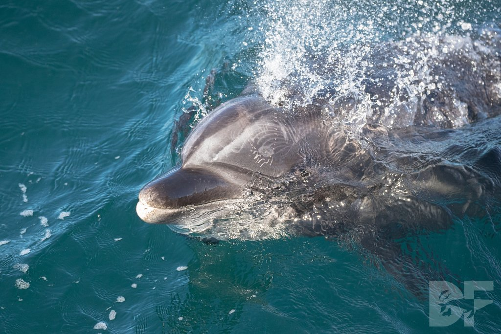 A Good Day to be a Dolphin VI