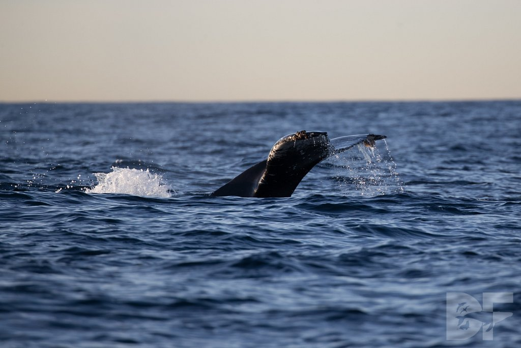 First Humpback of 2020 IV