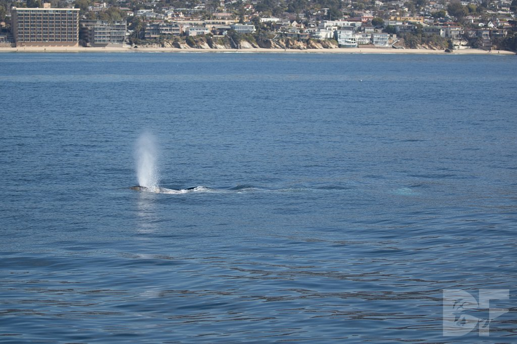There Go Gray Whales III
