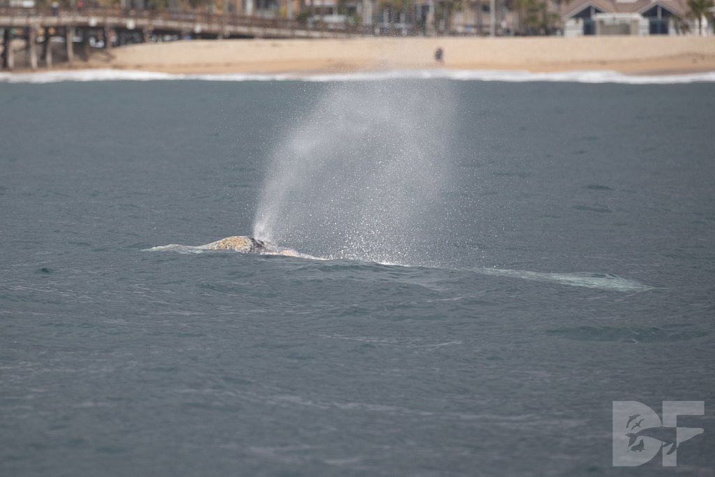 There Go Gray Whales XI