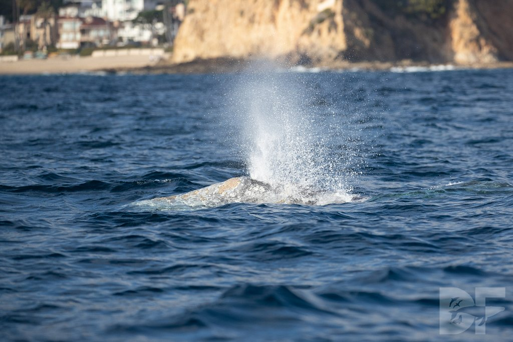 There Go Gray Whales XVIII