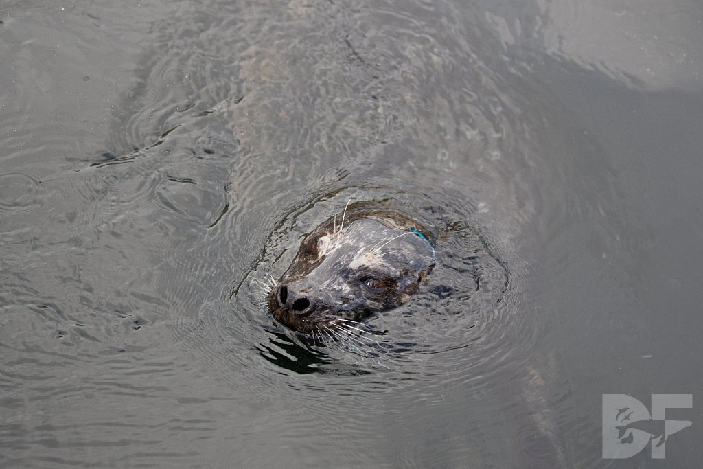 Bar Harbor Seal