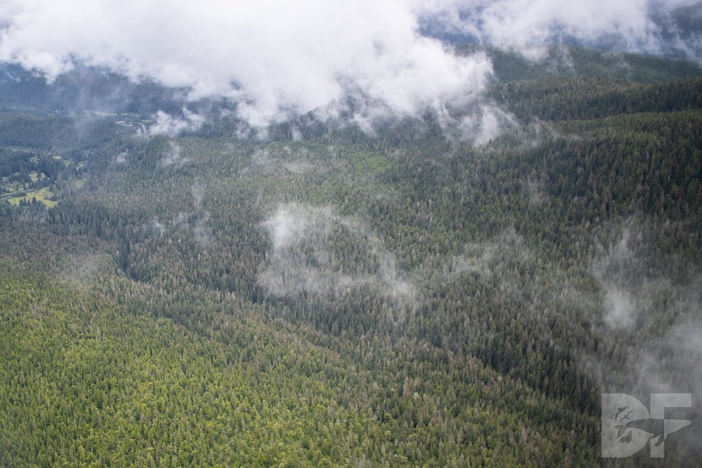Trees of the Tongass I