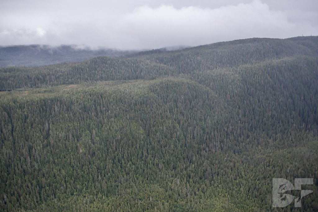 Trees of the Tongass II